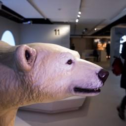 Выставка «Путешествие в Арктику»