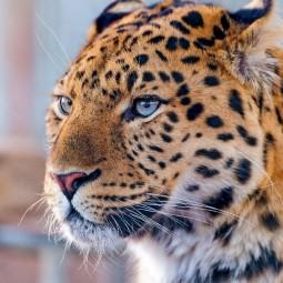 Всемирный день защиты животных в Дарвиновском музее 2017