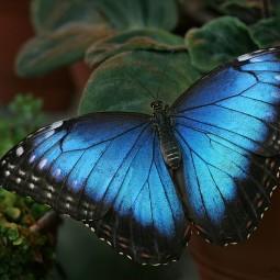 «День бабочки» в Биологическом музее 2016