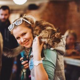 Выставка-пристройство животных из приюта «Юна-Фест» 2018