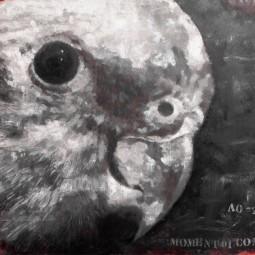 Выставка «Глядя на птиц»