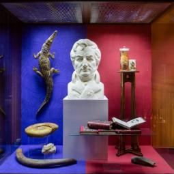Выставка «Великие открытия и великие ошибки Жоржа Кювье»