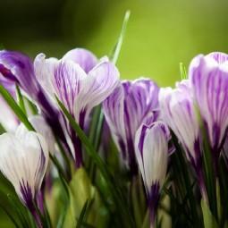 Выставка «Весна в Царицынских оранжереях»