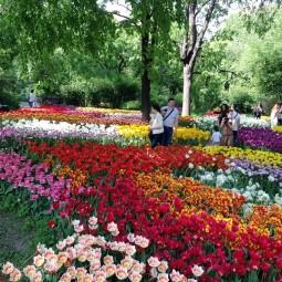 XVII Весенний фестиваль цветов в «Аптекарском огороде»