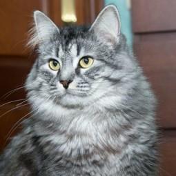 Выставка кошек «Юна-фест»