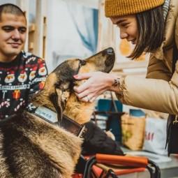 Выставка-пристройство животных из приюта «Юна-Фест» 2020