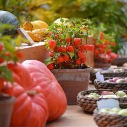 Фестиваль цветов, урожая и искусства «Краски осени» 2019