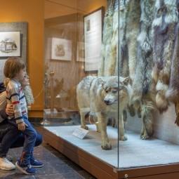 Всемирный день животных в Дарвиновском музее 2021
