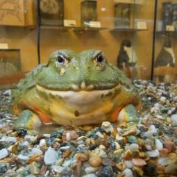 День болот в Биологическом музее 2017