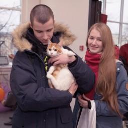 Благотворительный фестиваль «Тыквы и коты» 2017