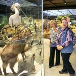 День старшего поколения в Дарвиновском музее 2018
