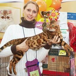Международная выставка кошек «Мистер Кот» в Сокольниках» 2017