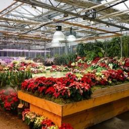Выставка «Японский сад, Царство мхов и новогодние растения»