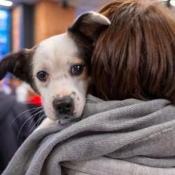 Благотворительный фестиваль «Собаки, которые любят» 2021