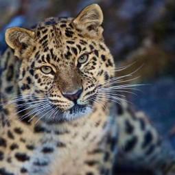 Эко-фестиваль «День Леопарда» 2017