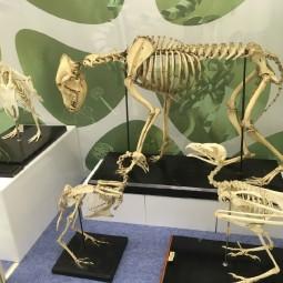 Выставка «ЧП в ДНК»