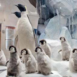 День пингвина в Дарвиновском музее 2020