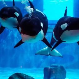 Неделя китов в «Москвариуме» 2019