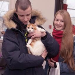 Фестиваль «Тыквы и коты» 2019