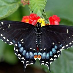 Семейный праздник «Осторожно, бабочки!» 2019