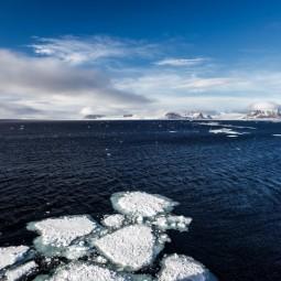 Выставка «Из Русской Арктики с любовью»