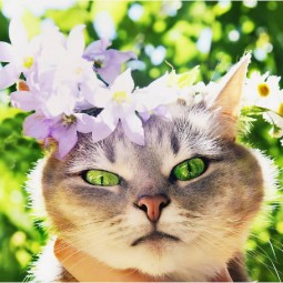 Выставка «Цветы. Грани прекрасного. Фотоработы Кидары Диаманты»