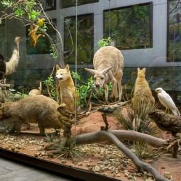 День экзотических островов в Дарвиновском музее 2021