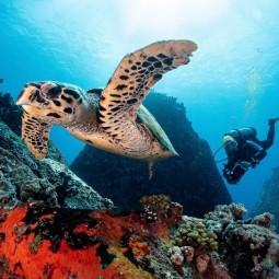 Фестиваль подводной фотографии «Дикий подводный мир» 2020