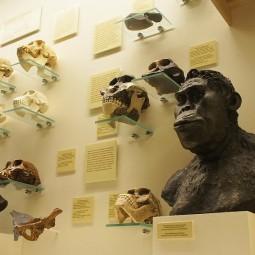 Выставка «Превращение в человека»
