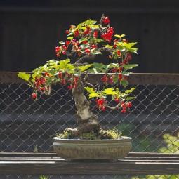 Выставка «Бонсай — миниатюрные пейзажи из живых российских деревьев»