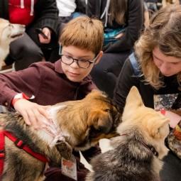 Благотворительный онлайн- фестиваль «Собаки, которые любят» 2020