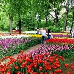 Весенний фестиваль цветов в «Аптекарском огороде» 2018