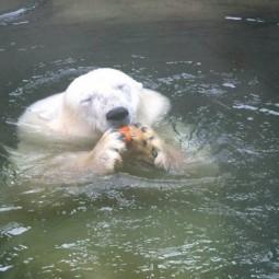 День города в Московском зоопарке 2016