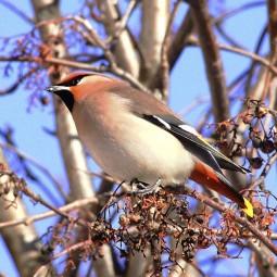 Международный день птиц «Пернатый выходной» 2017