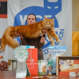 Международная выставка кошек «У Лукоморья» в ТРЦ «Гагаринский» 2021