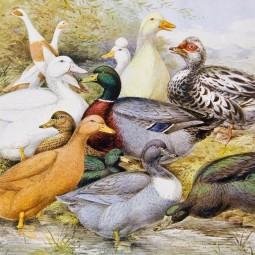 Выставка «Птичник в усадьбе XIX — начала ХХ веков»