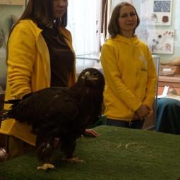 День птиц в Биологическом музее 2019