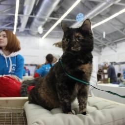 Выставка-пристройство кошек из приюта «Юна-Фест» 2019