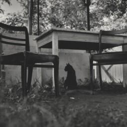 Выставка «Кошки города Гродно»