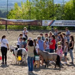 Экскурсии на ферму миниатюрных лошадок и мини-зоопарк