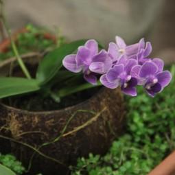 Выставка «Путешествие к орхидеям»