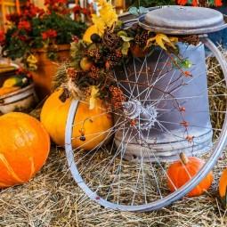 Хэллоуин на Городской ферме ВДНХ 2021