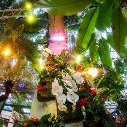 Фестиваль «Тропическая зима» 2016