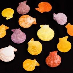 Выставка «Морские сокровища слепого коллекционера»