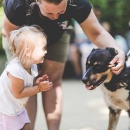 Благотворительный проект «Прогулки с собаками»