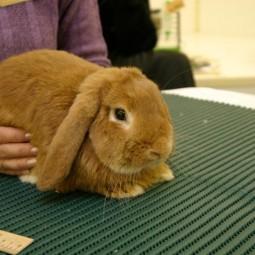 Выставка карликовых кроликов 2019