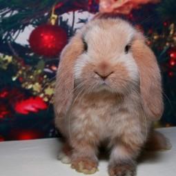 Выставка декоративных кроликов в Биологическом музее 2020