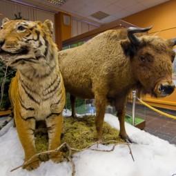 Выставка «Животные на карте России»