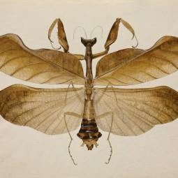 Выставка «Жуки и гусеницы. Насекомая культура 1920-1940-х»