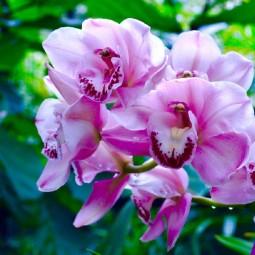 Фестиваль орхидей, хищных растений и суккулентов «Тропическая зима» 2019/20